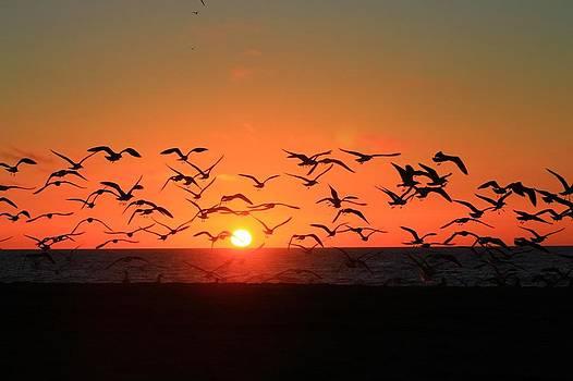 Sunset Birds by Peter Kotzbach