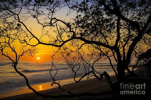 Oscar Gutierrez - Sunset Branches