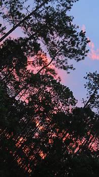 Sunset by Brandi Jones