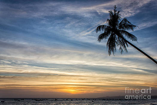 Sunset By A Palm by Christos Koudellaris