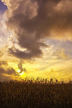 Sunset Corn Field in Central Indiana by Bailey and Huddleston