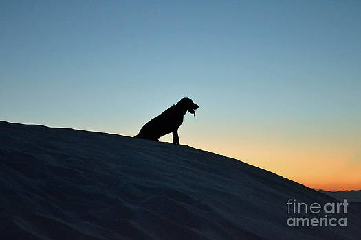 Sunset Dog by Carrie Cooper
