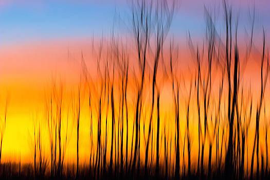 Sunset Fire by Jackie Novak