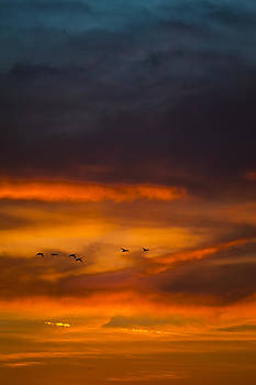 Sunset Flight by Eleanor Ivins