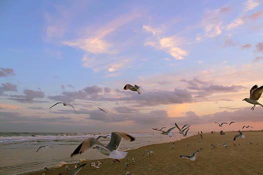 Sunset Flight of the Sea Gulls by Kay Mathews