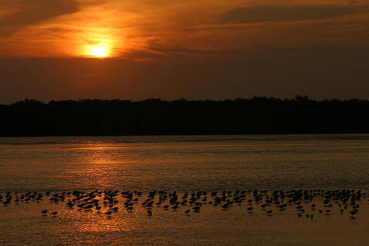 Sunset Flock by Mark Russell