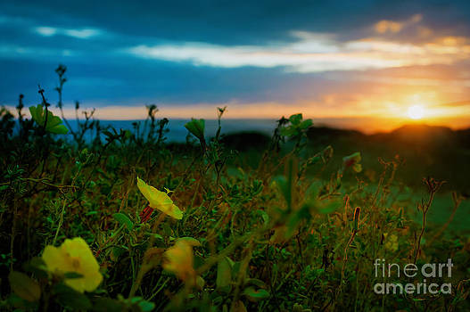 Sunset Flowers by Tammy Smith