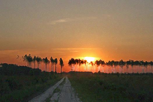 Sunset Forest by Bob Richter