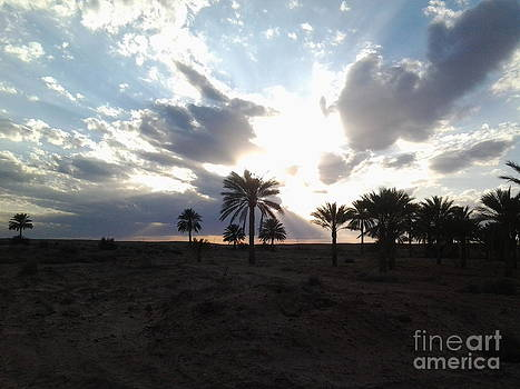 Sunset in Ouled Djellal through the oasis by Mourad HARKAT
