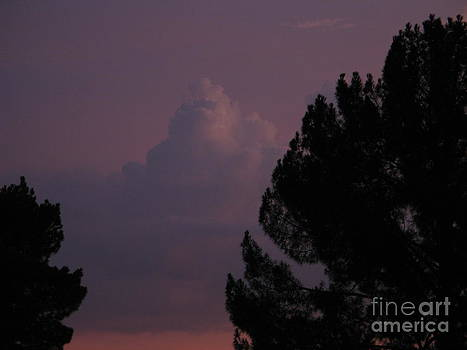 Sunset in purple by Theresa Davis
