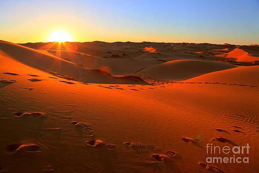 Sophie Vigneault - Sunset in the Desert