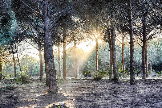 Sunset in the forest... by Ckworkshop