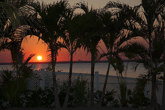Sunset in the Palms by Denise Rafkind