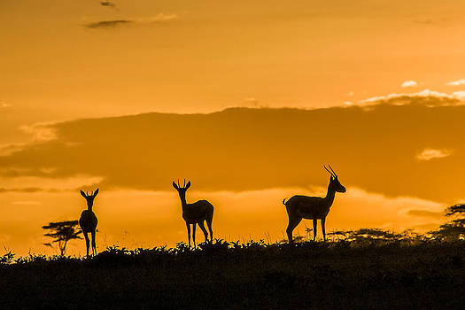 Sunset in the Serengeti by Sue Ratcliffe