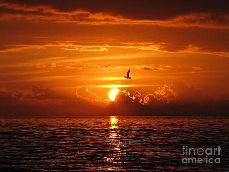Sunset by Irina Gladkaja