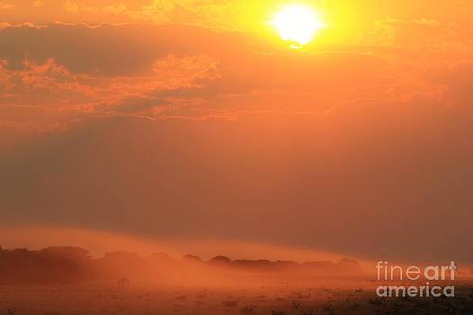 Hermanus A Alberts - Sunset Landscape - Giraffe Solitude