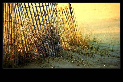 Rosemarie E Seppala - Sunset Light Sand Dune Fence