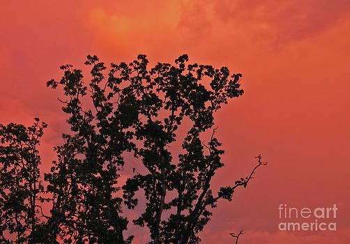 Deanna Proffitt - Sunset of Fire