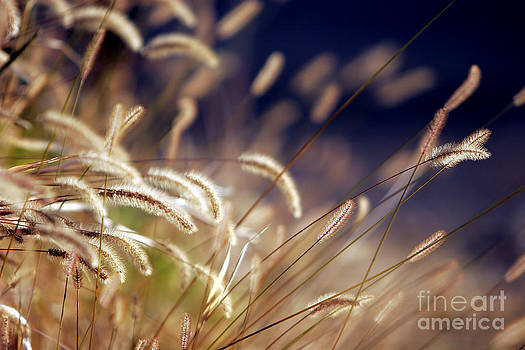 Sunset on Autumn Grass by Lincoln Rogers