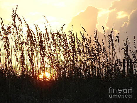Sunset On The Dunes St. Augustine by Leara Nicole Morris-Clark