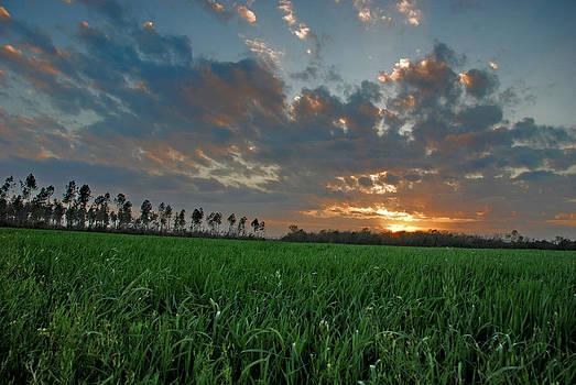 Sunset On The Farm by Jennifer Kelly