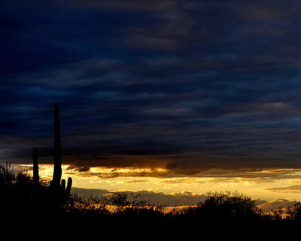 Sunset Over Sonoran Desert by Jon Van Gilder