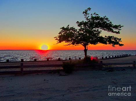 Susan Carella - Sunset Over The Bay With Tree