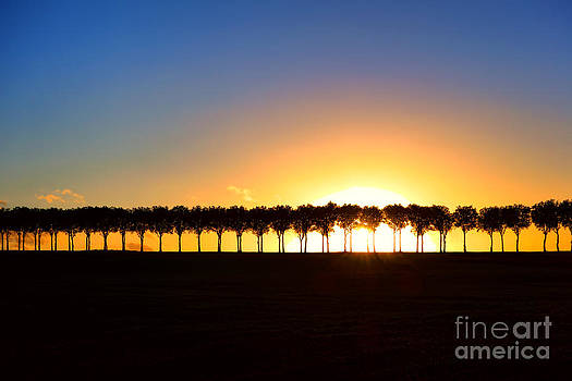 Sunset over Tree Lined Road by Olivier Le Queinec