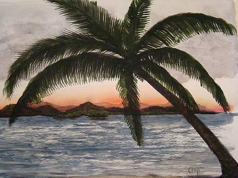Sunset Palm by Chip Picott