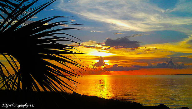 Sunset Palm by Marty Gayler