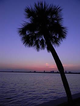 Sunset Palm Tree by Joanne Askew