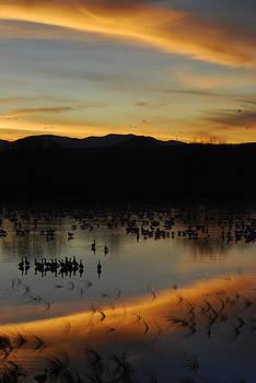 Sunset Reflection by Shirin McArthur