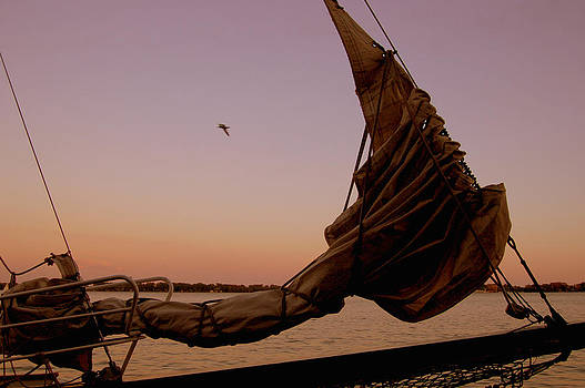 Sunset Sail by Debbie Cook