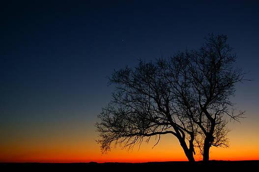 Sunset Silhouette by Jann Kline
