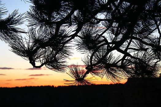 Veronica Vandenburg - Sunset Silhouette