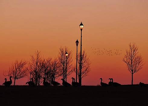 Joy Bradley - Sunset Silhouette