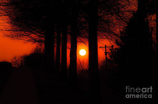 Andee Design - Sunset Silhouette Painterly