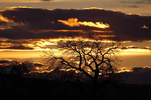 Sunset Silhouette by Shirin McArthur