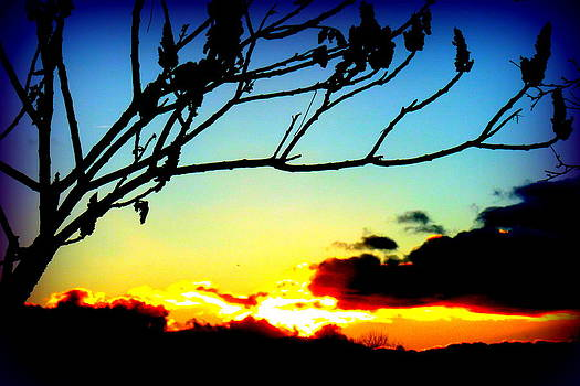 Sunset Silhouettes by The Creative Minds Art and Photography