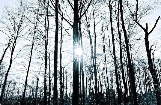 Sunset Stark Blue Wood by Brooke Friendly