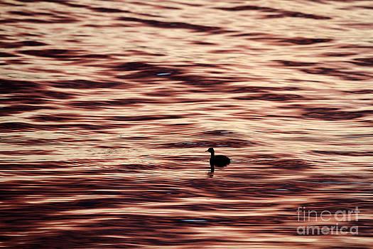 James Brunker - Sunset Swim