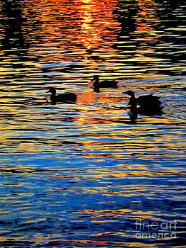 Robyn King - Sunset Swim