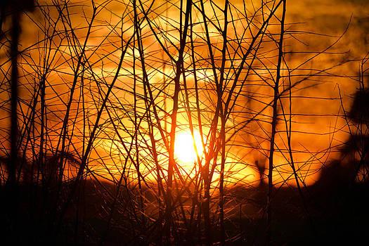 Sunset Through The Brush by Shey Stitt