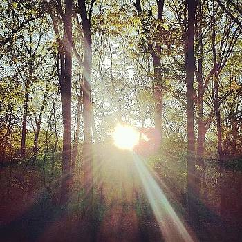 #sunset Through The #trees Next To My by Matthew Tarro
