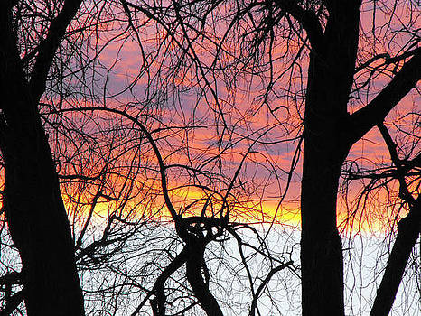 Sunset Through The Trees by Yvette Pichette