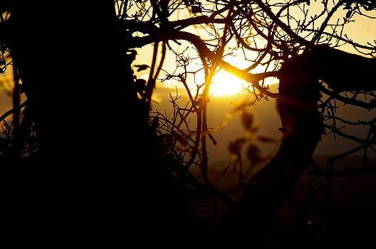 Sunset Through Tree  by Tom Salt