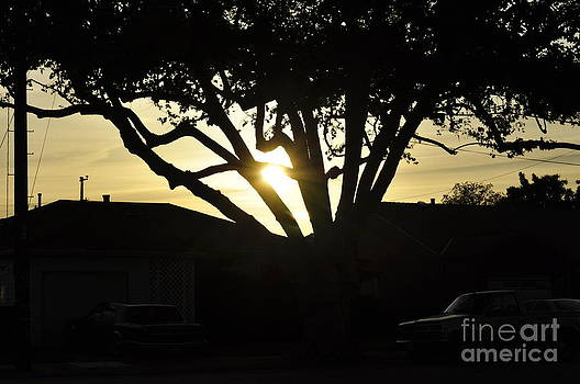 Sunset Through Trees by Trisha Fawver