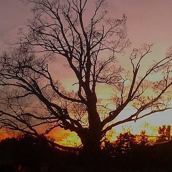 #sunset #tree #beautiful #pink #pinksky by Laura Vaillancourt