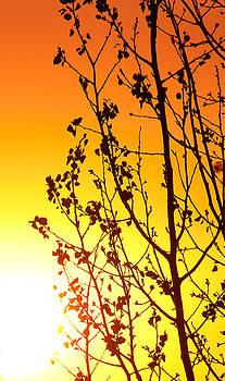 Sunset Tree by Elizabeth Richardson