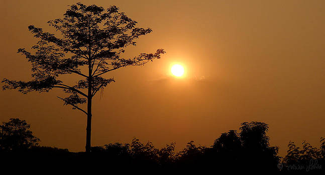 Sunset Tree by Evewin Lakra